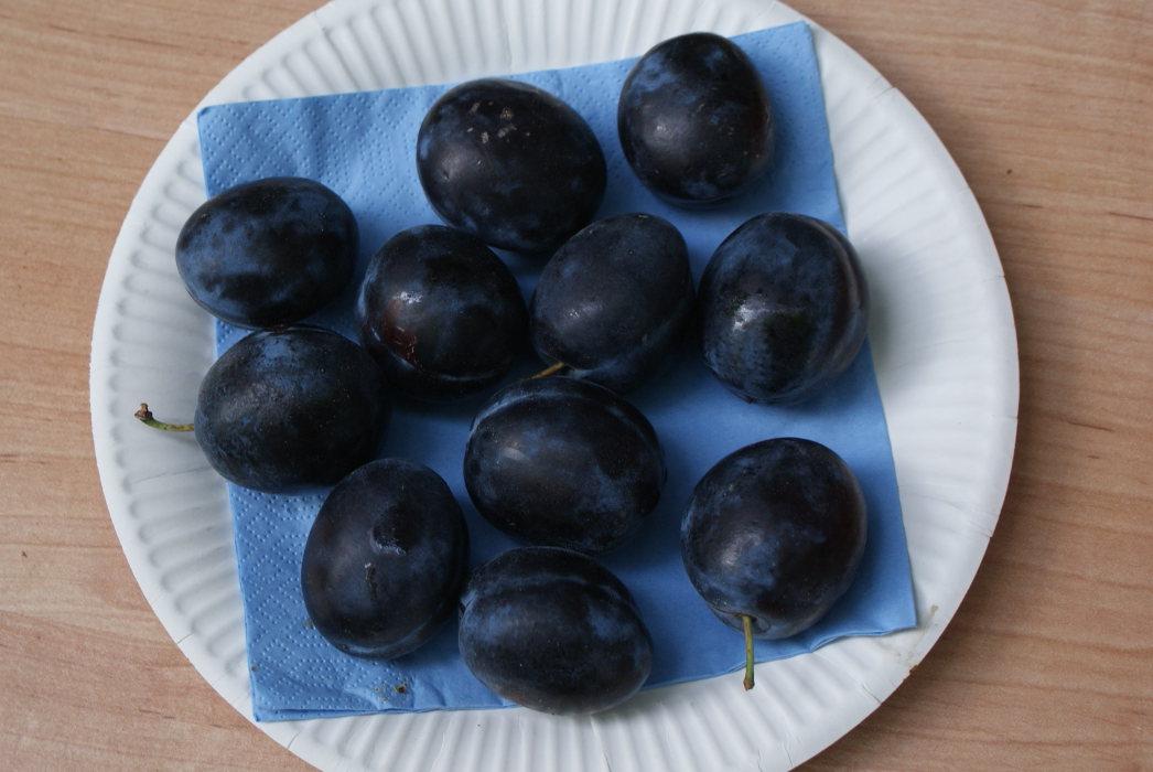 Backfrucht